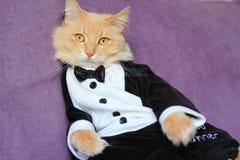 猫佩带的无尾礼服 库存图片
