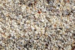 背景接近的收集贝壳贝壳 免版税库存照片