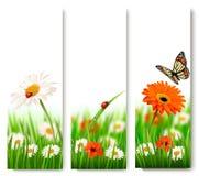 夏天与五颜六色的花和蝴蝶的自然横幅 免版税图库摄影