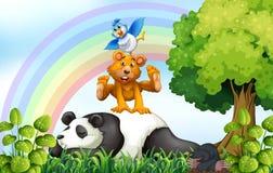 Животные и джунгли Стоковое Изображение RF