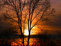 Δασικό τοπίο Ιλλινόις ηλιοβασιλέματος Στοκ Εικόνες