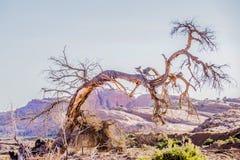 在纪念碑谷亚利桑那附近的死的老树 库存照片