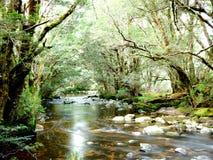 不可思议的小河 库存照片