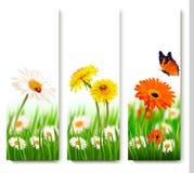 夏天与五颜六色的花和蝴蝶的自然横幅 免版税库存照片