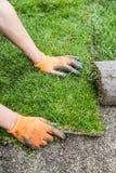 Засаживает новую траву дерна Стоковые Фото