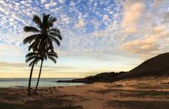 在日落的椰子在复活节岛上 免版税库存照片
