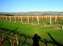 холмы фотографируя виноградник завальцовки Стоковое Изображение