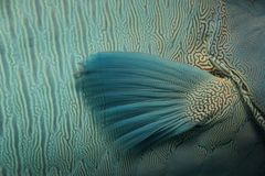 πτερύγιο Στοκ φωτογραφία με δικαίωμα ελεύθερης χρήσης
