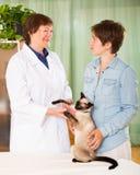 Κτηνιατρική συνοδευτική δίνοντας διάλεξη στο θηλυκό ιδιοκτήτη γατών Στοκ εικόνα με δικαίωμα ελεύθερης χρήσης