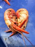 对小龙虾的爱 免版税库存图片