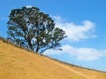 Один холм дерева, Окленд Стоковая Фотография RF