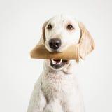 与骨头的狗 免版税库存图片