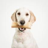 与骨头的狗 免版税库存照片