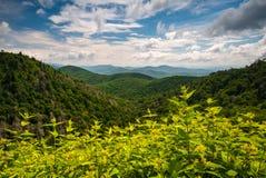 阿巴拉契亚山脉夏天阿什维尔北卡罗来纳蓝色里奇 免版税库存图片