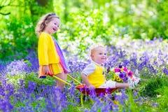 孩子在有会开蓝色钟形花的草花的一个庭院里 库存照片