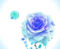水彩传染媒介蓝色玫瑰 免版税库存图片