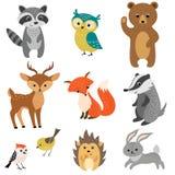 逗人喜爱的森林动物 库存图片