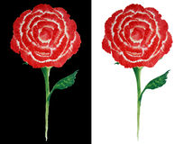 Ζωγραφική των κόκκινων τριαντάφυλλων ως αφηρημένο ύφος στο γραπτό υπόβαθρο Στοκ Φωτογραφία