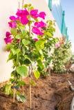 Νέα λουλούδια που φυτεύονται Στοκ Εικόνες