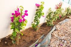 Νέα λουλούδια που φυτεύονται Στοκ Εικόνα