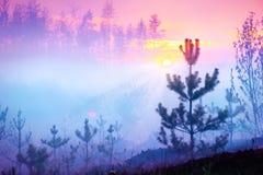美好的自然日出有雾的森林 库存照片