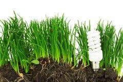 节能灯、草和地球,概念 免版税库存照片