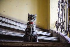 猫凝视 库存图片