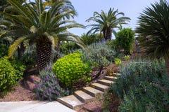 巴塞罗那,西班牙植物园  图库摄影