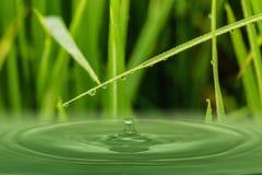 Πράσινα φύλλα χλόης με τις πτώσεις δροσιάς Στοκ εικόνα με δικαίωμα ελεύθερης χρήσης