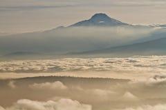 从亚马逊雨林的美好的风景 免版税库存图片