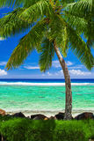 在惊人的热带海滩的唯一棕榈树在库克群岛 图库摄影