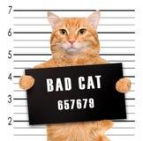 κακή γάτα Στοκ Εικόνες