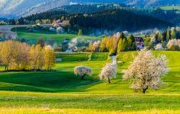 άποψη του τομέα και του λιβαδιού βουνών Στοκ Φωτογραφίες