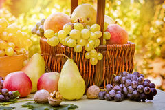 季节性新鲜,有机果子果子 免版税图库摄影