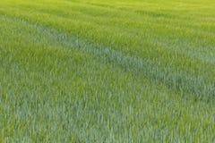 春天风景在巴伐利亚 免版税图库摄影