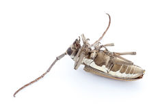 停止的甲虫 库存照片