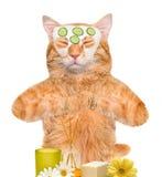 温泉洗涤猫 免版税库存图片