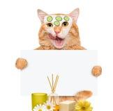 温泉洗涤猫 库存照片
