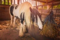 马在稳定 免版税库存图片