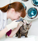 女性专业有耳镜的狩医医生审查的一个猫耳朵 免版税图库摄影