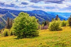 费尔德伯格山在春天 库存图片