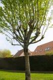 Красивый сад с деревом Стоковые Изображения