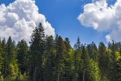 森林的上面 库存图片