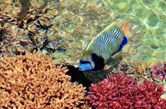 热带鱼在珊瑚海滩自然保护游泳 免版税图库摄影
