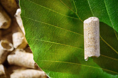 优质质量山毛榉的木材药丸 免版税图库摄影