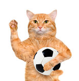 与一个白色足球的猫 库存照片