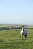马牧场地 图库摄影