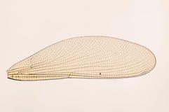 Крыло насекомого Стоковая Фотография RF