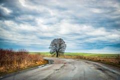 Сиротливое дерево проселочной дорогой Стоковая Фотография RF