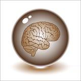 διάνυσμα απεικόνισης εγκεφάλου Στοκ φωτογραφία με δικαίωμα ελεύθερης χρήσης